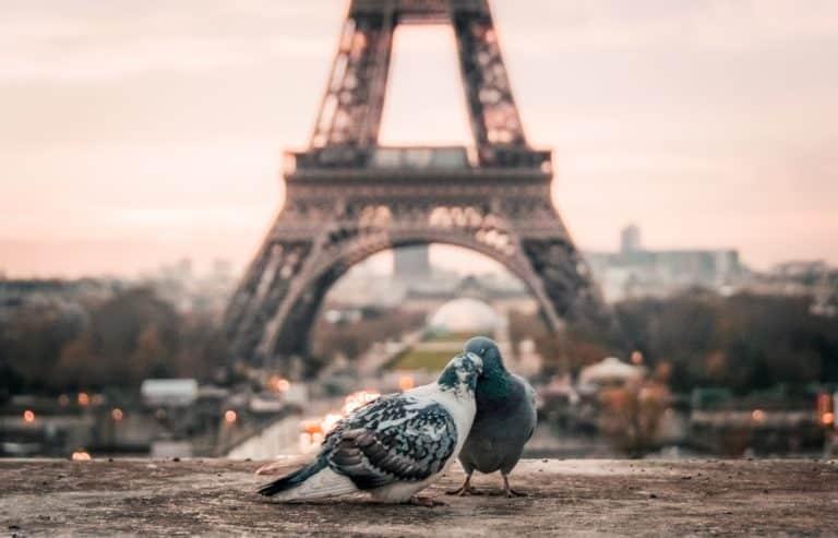 Un trés joli couple original devant la tour effeil pour un thème de mariage paris.